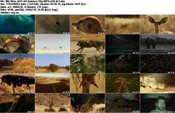 BBC - Africa (2013)